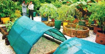 growing-vegetables-and-herbs-on-your-terrace